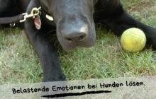 Belastende Emotionen bei Hunden