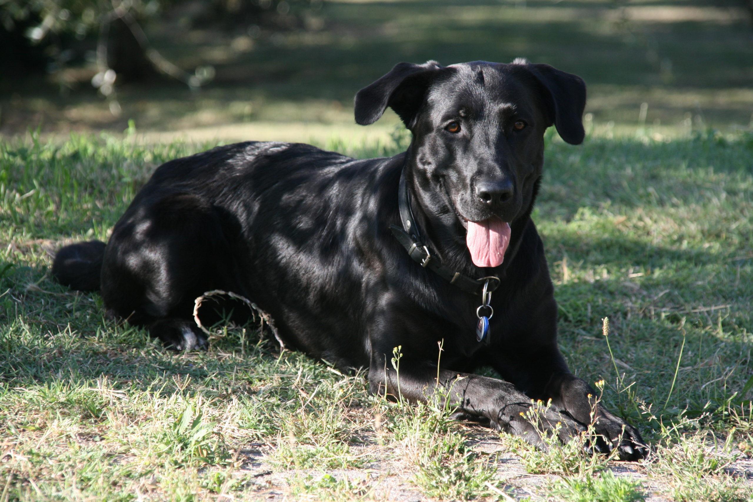 Bioresonanz für Hunde