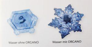 ORGANO_Wasser