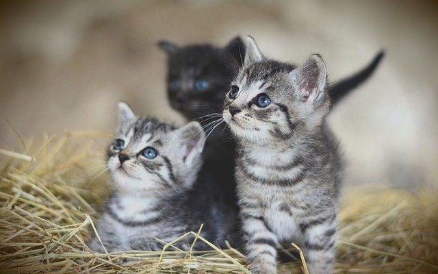 Bioresonanz-für-Katzen