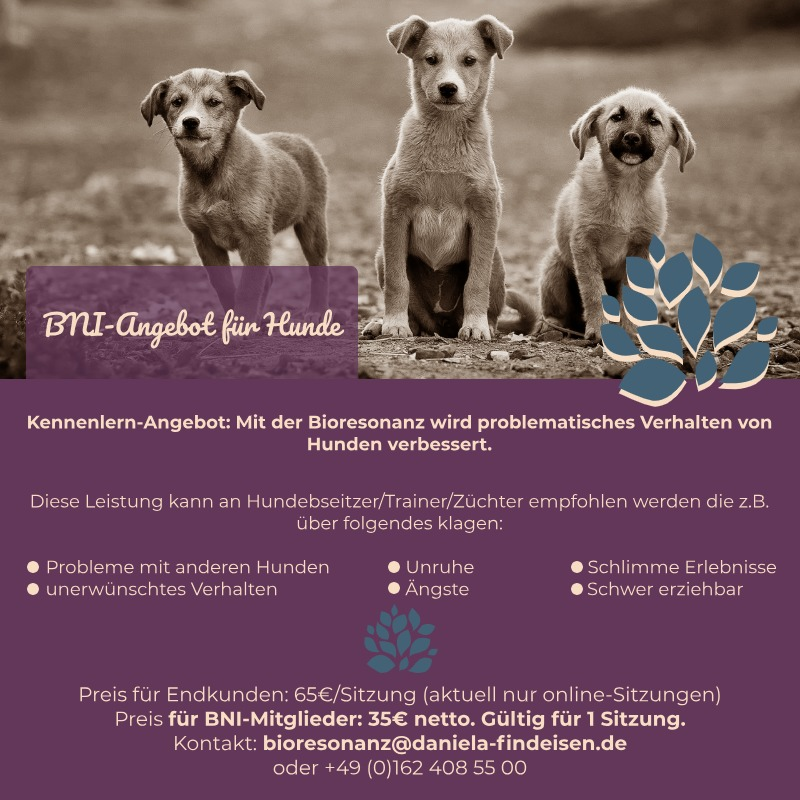 BNI-Angebot: Hunde
