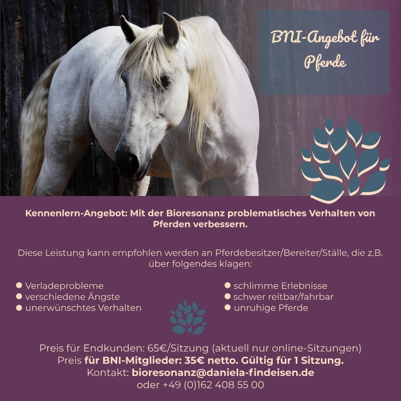 BNI-Angebot: Pferde