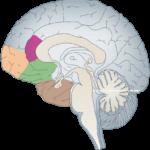 Wie Du Schlafhormone beeinflussen kannst